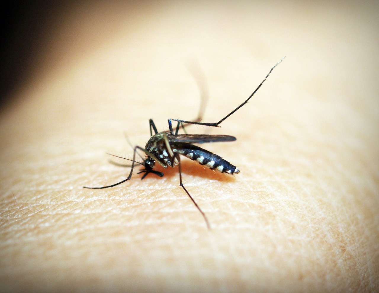 Malaria Warning As Resistant Strain Spre To Vietnam