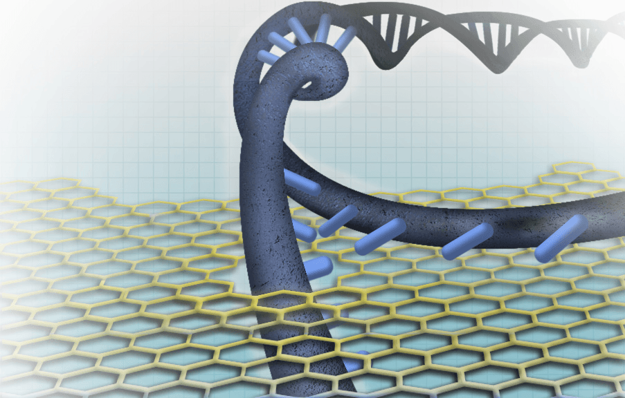 Nanopore-based DNA sequencing concepts generally entail one of the DNA strands passing through the nanopore sensor, where the individual nucleotides (DNA building blocks) are distinguished from each other.